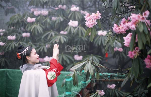 峨眉山杜鹃花节实景图